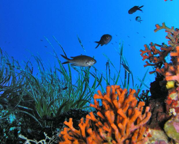 Ogliastra diving sardinina diving center in bari sardo diving center courses equipment - Dive blu bari ...